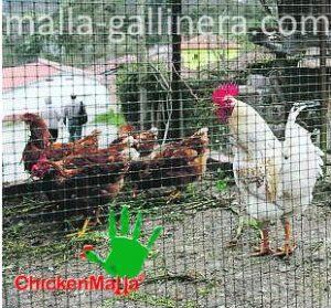 Chickenmalla para animales de corral.