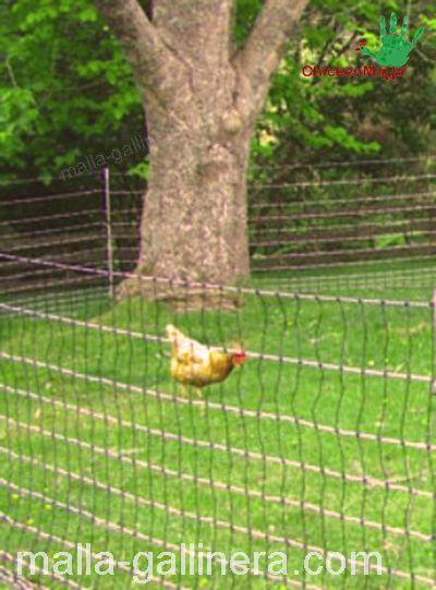 malla gallinera en campo abierto.
